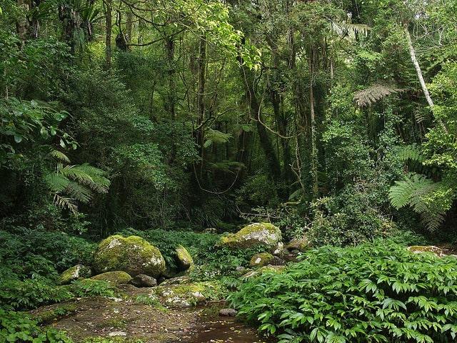 Tropical_Rainforest