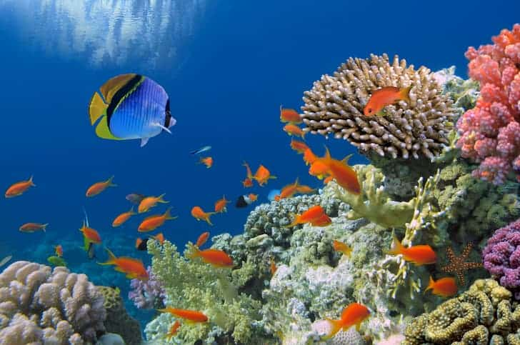 photo-tropical-fish-on-coral-reef-biodiversity