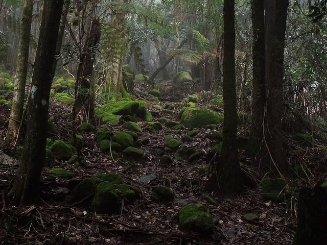 Rainforest_jungle