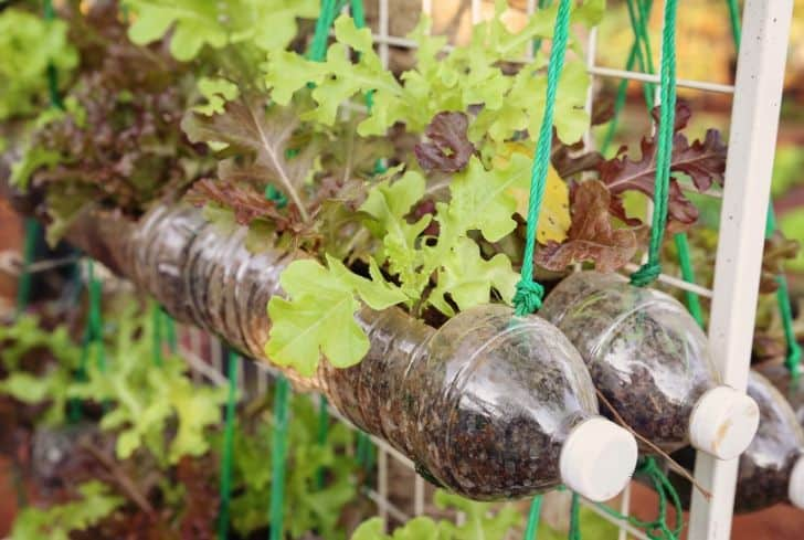 small-plants-bottle-recycle