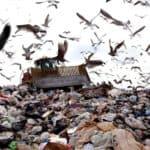 garbage-trash-landfill-site-environmental-concern