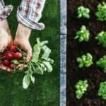 organic-farming-vegetables