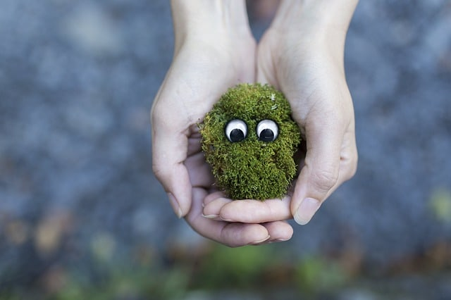 moss-ecology-environment-protection