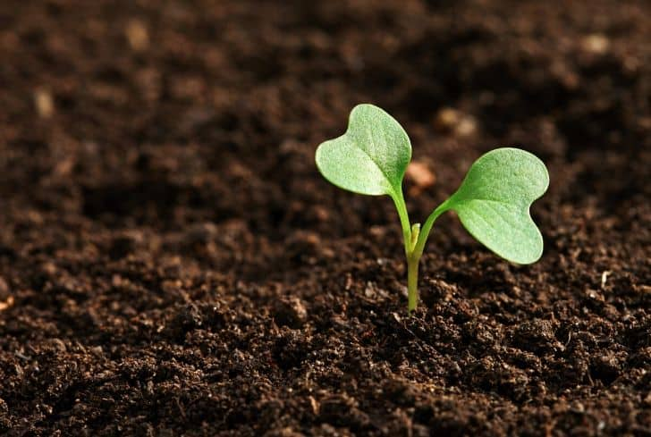 sapling-plant-growing-in-soil