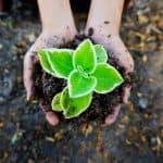 seedling-soil-green-plant-ecology