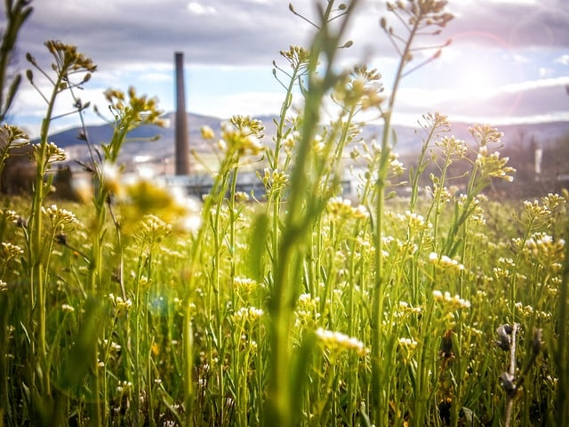 future-ecology-environment-energy