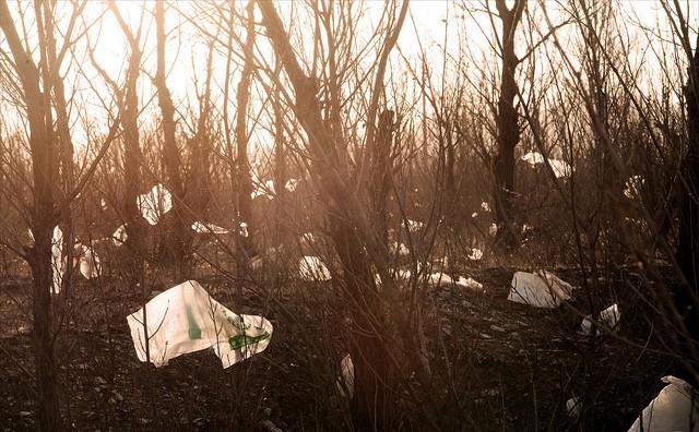 plastic-bags-at-dawn