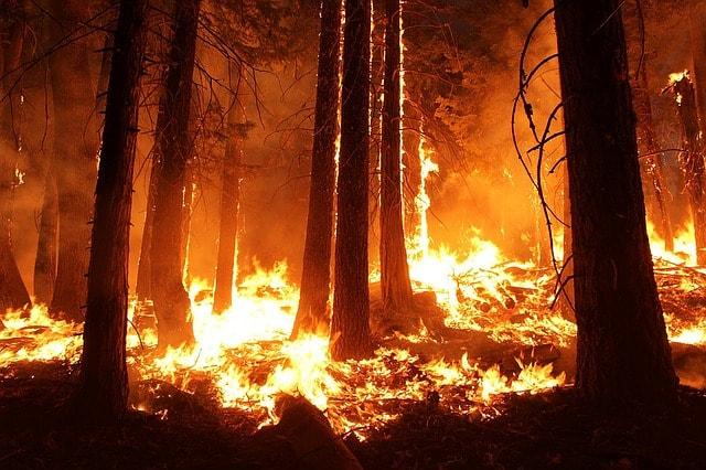 wildfire-forest-fire-blaze-smoke