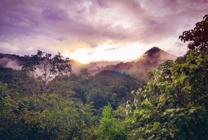 amazon-rainforest-forest