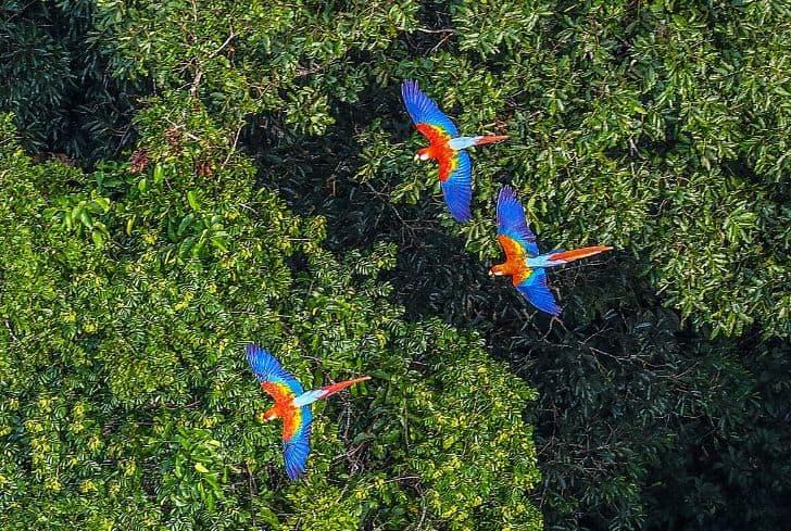 birds-flying-rainforest