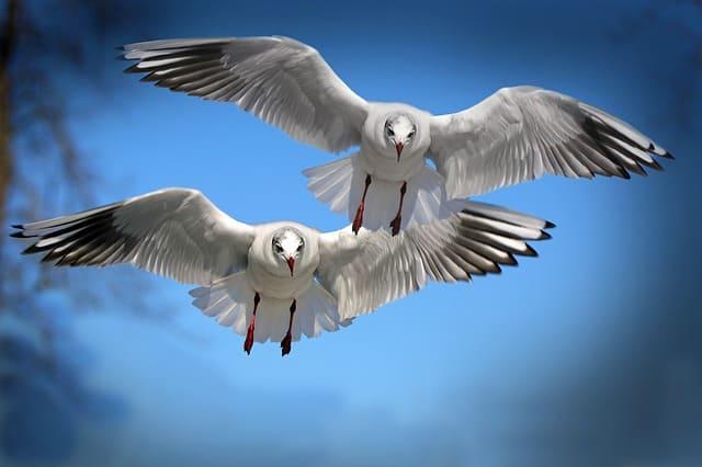 gulls-birds-fly-water-bird