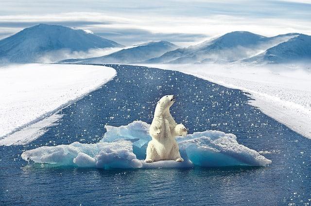 polar-bear-climate-change-bear