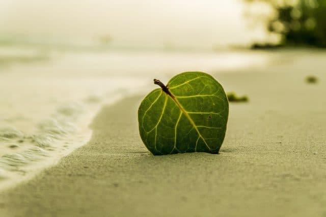 green-leaf-on-beach