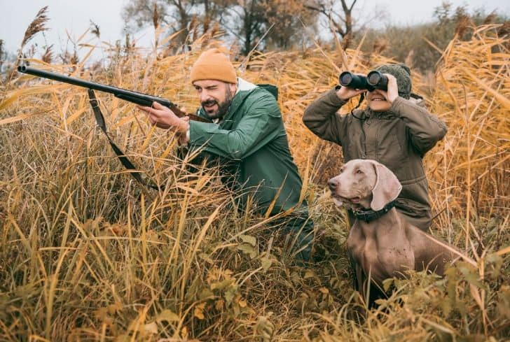 family-dog-forest-hunting-poaching