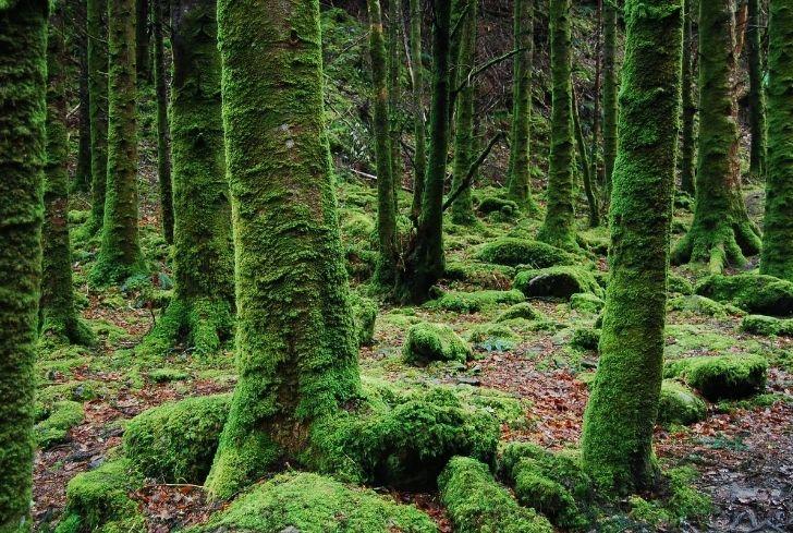 moss-on-the-tree