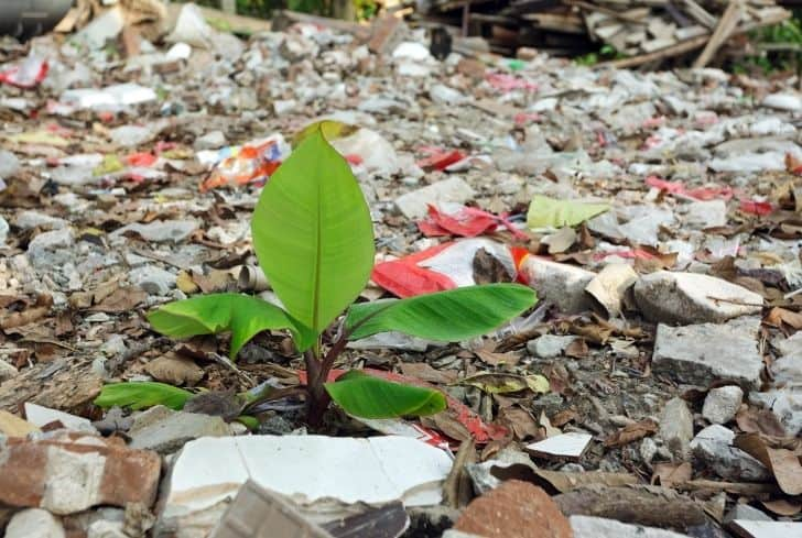 plant-in-pollution